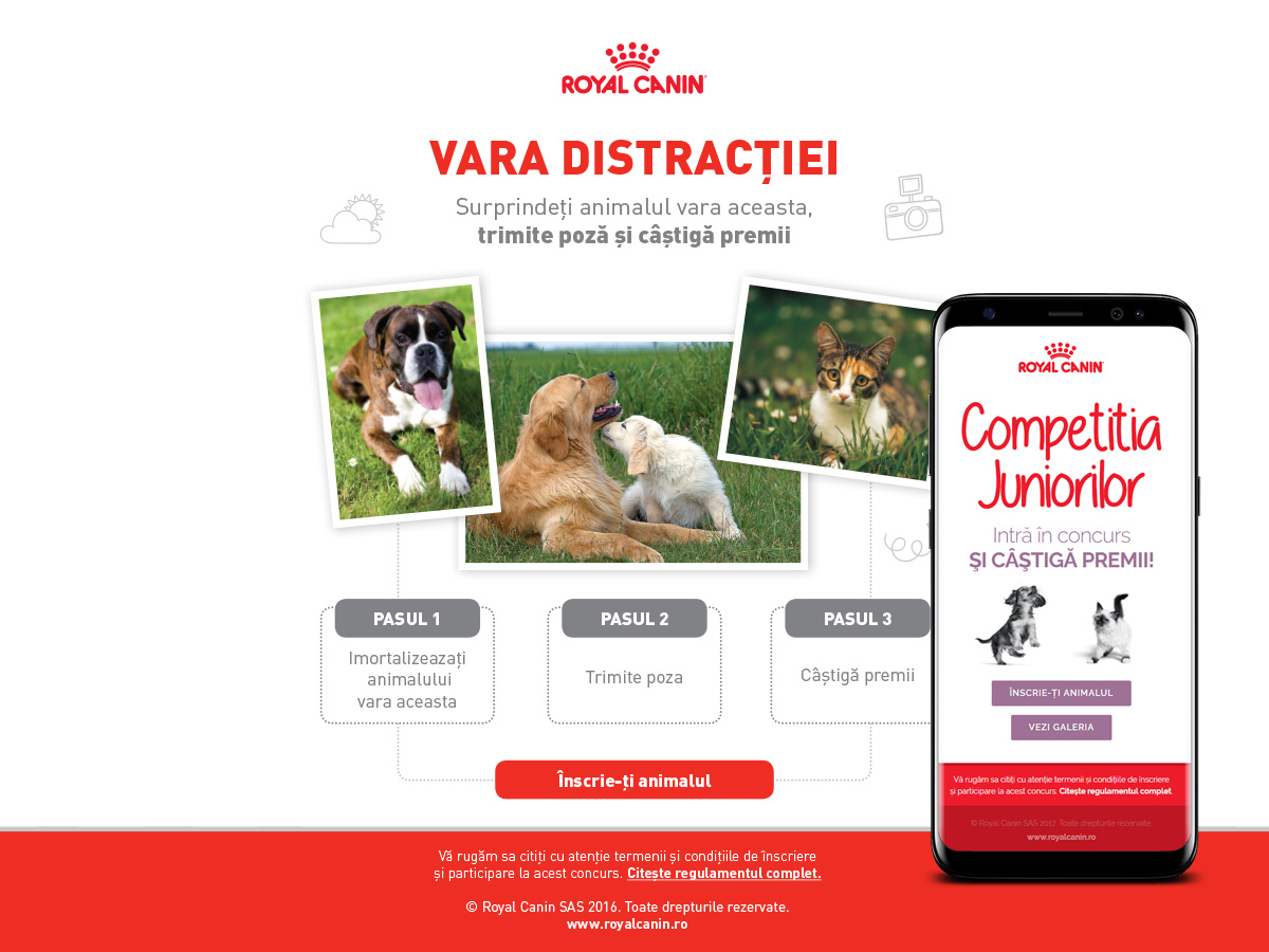 digital agency - woopy media -concurs-royal-canin